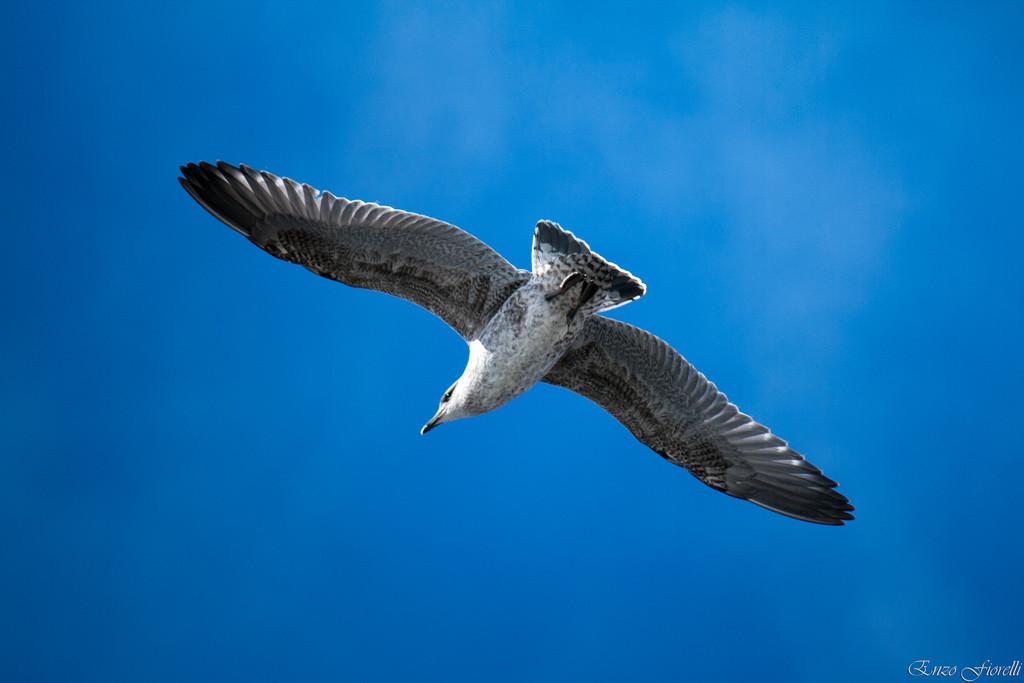 szybujący ptak DoM Dobre Miejsce