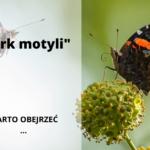 Cyrk motyli